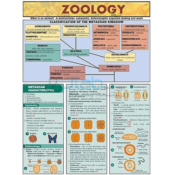 Zoology Chart