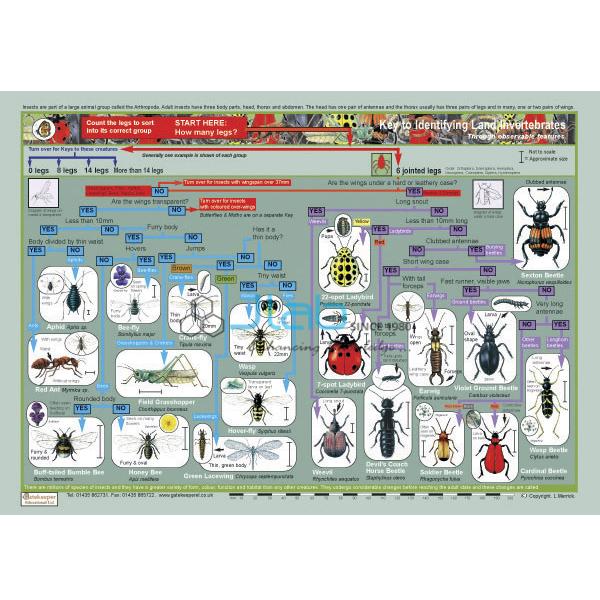 Key to Identifying Land Invertebrates