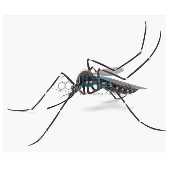 Aedes Aegypti Model