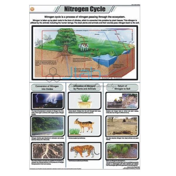 Nitrogen Cycle Chart India Nitrogen Cycle Chart Manufacturer India