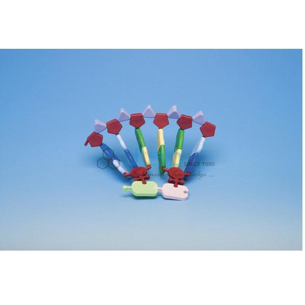 RNA 12 base Molecular Model