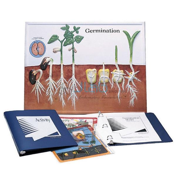 Germination Model