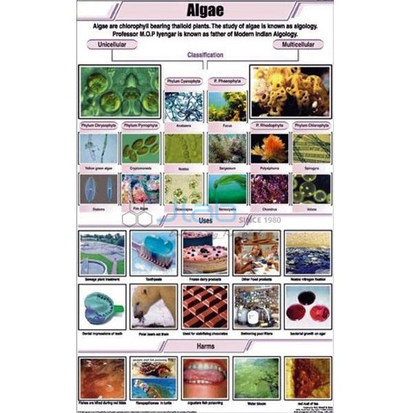 Algae Chart