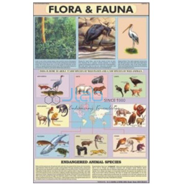 Flora and Fauna Chart