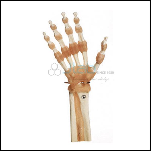 Hand Finger Joint Functional Model