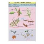 Analogous Organs
