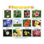 Flowers Chart