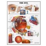 Healthy Eye Chart