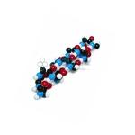 Alpha Helix Molecular Model Kit