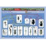 Key to Identifying Water Invertebrates