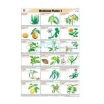 Medicinal plants - I