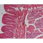 Comprehensive Histology Slide Set