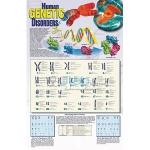 Human Genetic Disorders Poster