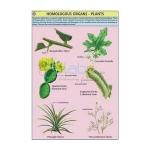 Homologous Organs Plants Chart