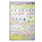 Triangular Bandages Chart